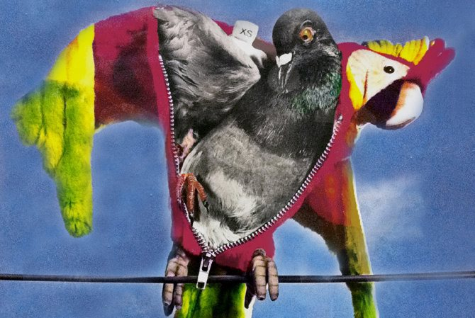 Birdy - Critique sortie Théâtre Meudon centre d'art et de culture