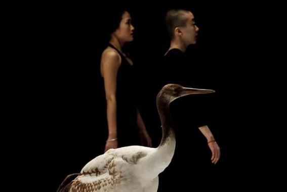 Légende : La majesté d'oiseaux danseurs. Photographie : Virginie Pontisso