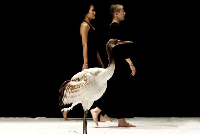 Crédit : Virginie Pontisso Légende : Light Bird, l'un des rendez-vous de Animal ! Animal !