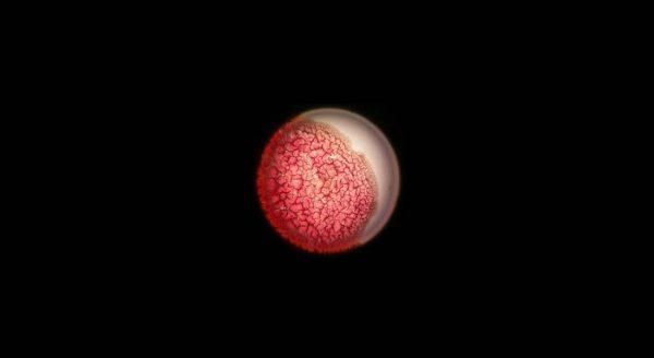 Solaris de Stanislas Lem, mise en scène de Pascal Kirsch